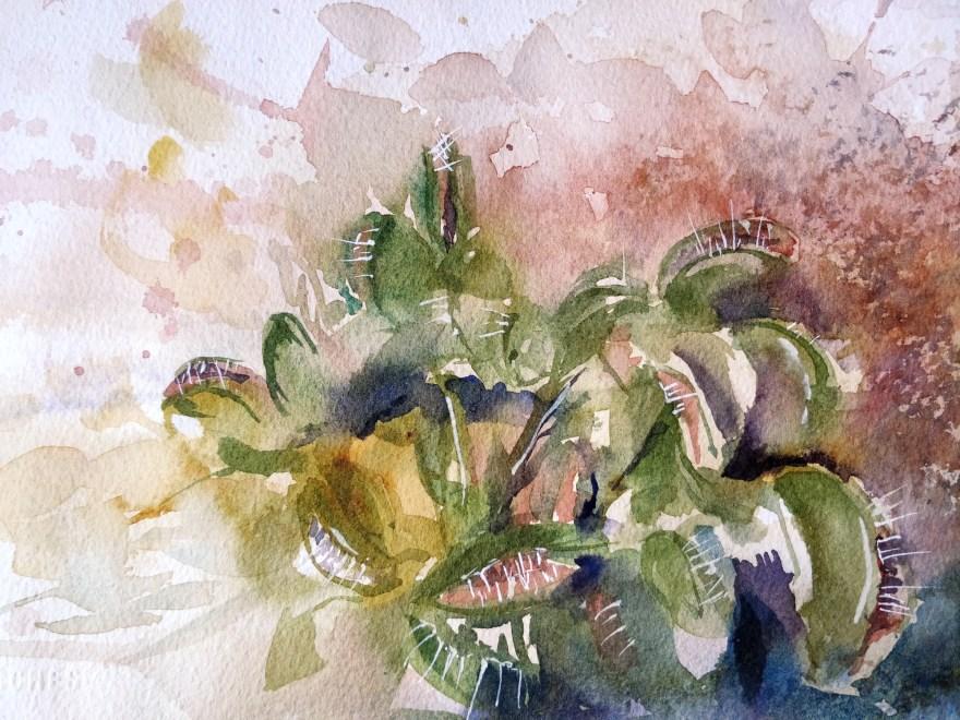 Venus flytrap, Loving quinacridone gold
