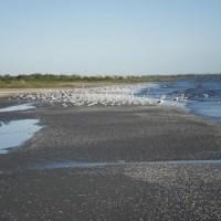 Playa Penino y las Aves migratorias