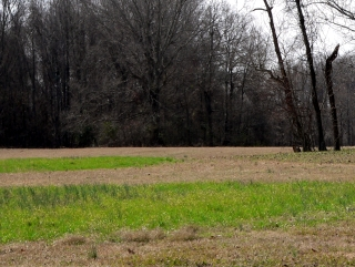 Different Color Grass = Former Embankments