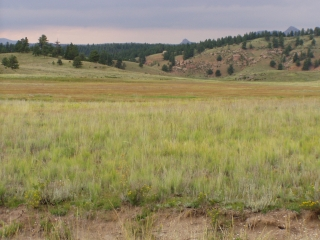 The Florissant Fossil Beds