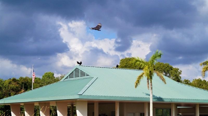 Vögel in den Everglades