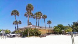 Palmen am Strand von Anna Maria Island, Florida