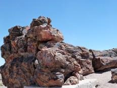 Ein versteinerter Baum im Petrified Nationalpark.