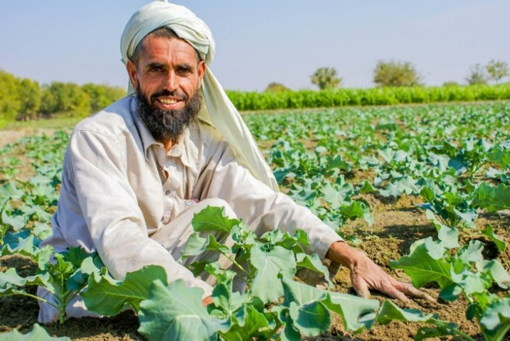 Agriculture   Afghanistan   U S  Agency for International Development An Afghan farmer at his agriculture demonstration farm in Rodaat district  of Nangarhar province in the