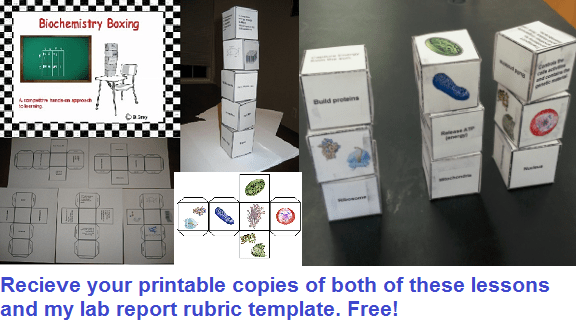 Biology Cell Organelle Activity