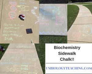 Biochemistry Sidewalk Chalk