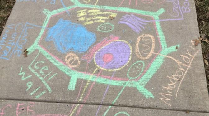 Cell Sidewalk Chalk Activity