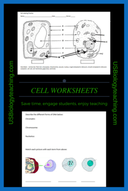 Cell Organelle Worksheet - USBiologyTeaching.com