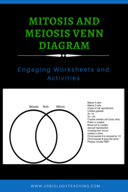 Mitosis and meiosis worksheets usbiologyteaching mitosis and meiosis worksheet ccuart Image collections