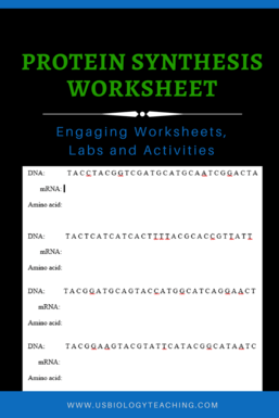 DNA Replication and Protein Synthesis Worksheets - USBIOLOGYTEACHING.COM