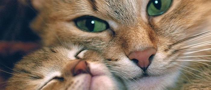 Cats: 160 interesting facts about them!