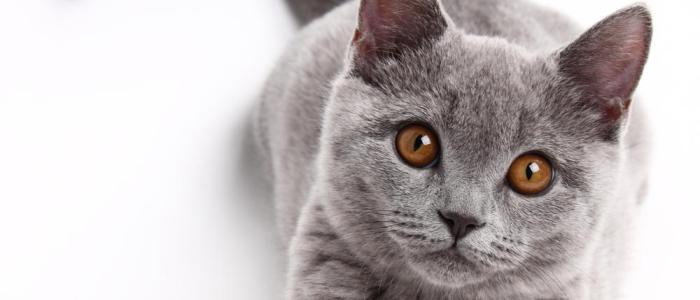 Cat Trivia: 61 amazing facts about our four-legged loves!