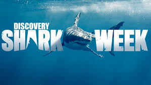 Shark Week trivia: 50 facts about the annual week-long Discovery Channel programming!