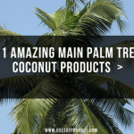 Palm Tree Coconut