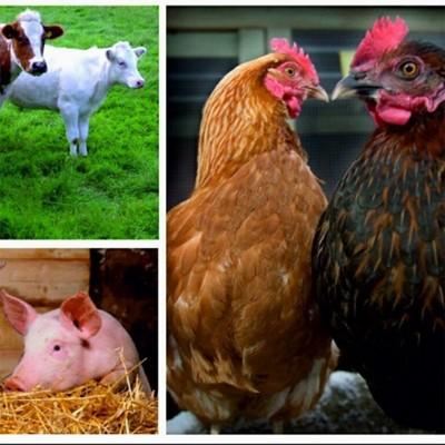 Кормовые добавки для сельскохозяйственных животных