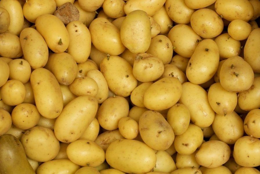 Les producteurs de pommes de terre veulent profiter de l'envolée de la demande