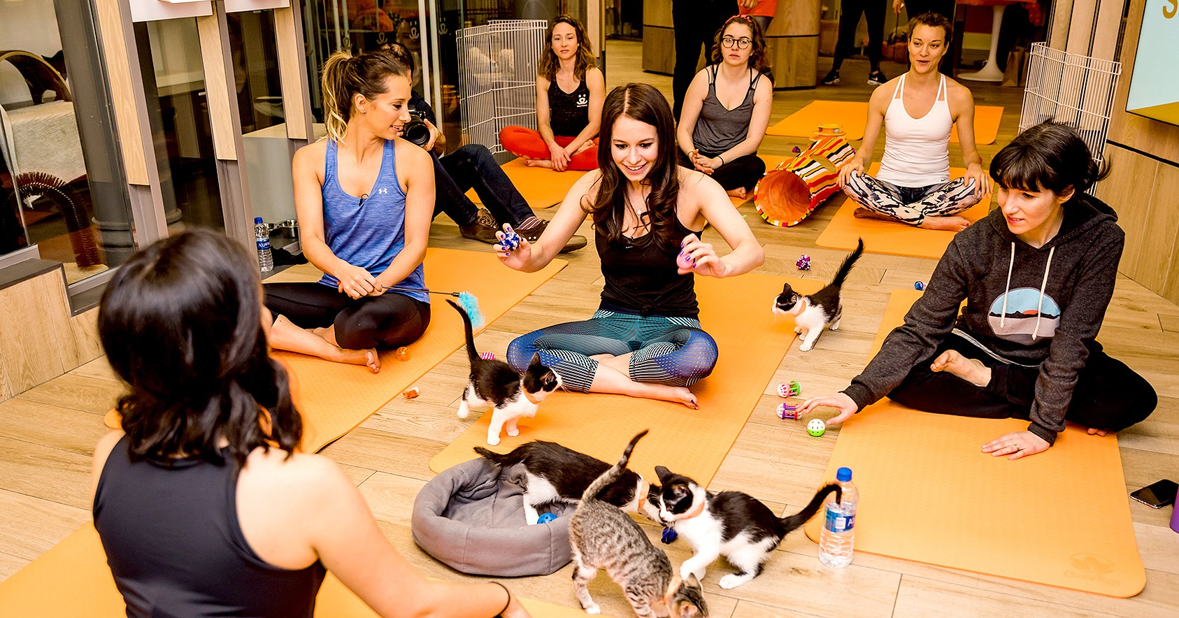 Us Weekly Tried Kitten Yoga and It Wasn't a Cat-astrophe – Watch!