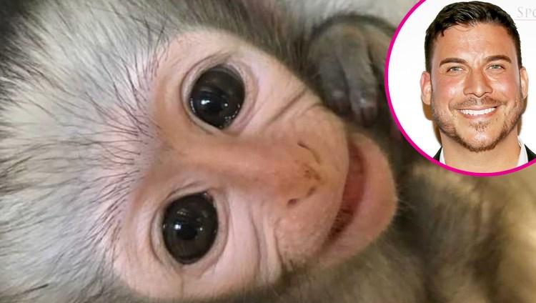 Jax-Taylor-monkey