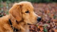 How Prepared Are You and Your Pet for a Natural Disaster?