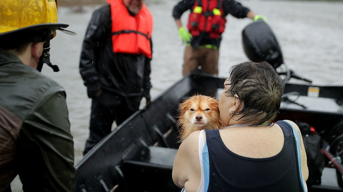 Truck Driver Rescues 64 Dogs And Cats From Hurricane Florence