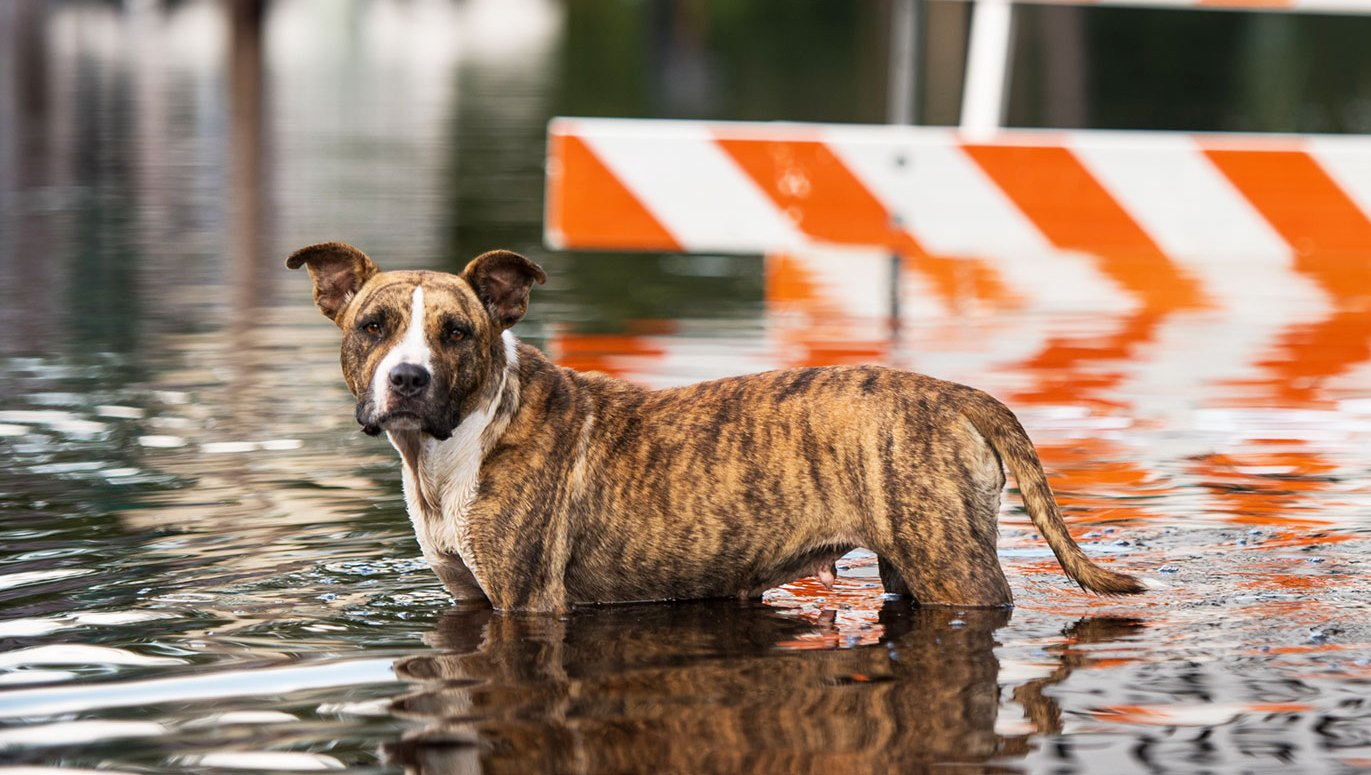 hurricane florence puppies