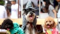 halloween-costume-dogs
