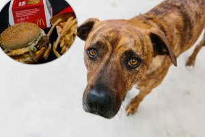 Oklahoma Dog Pretends to Be a Stray So He Can Get Hamburgers From McDonald's