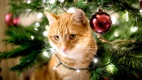 christmas-pets-hazards