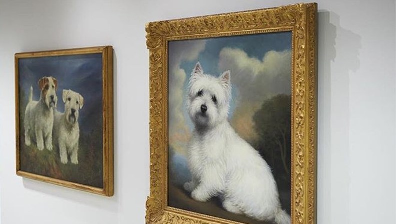 american kennel club museum