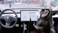 Tesla to Unveil 'Dog Mode' Feature That Will Allow Temperatures to Be Regulated for Pets Left in Cars