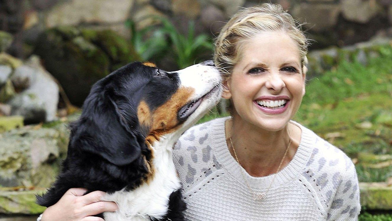 Sarah Michelle Gellar Dog Bella Dead