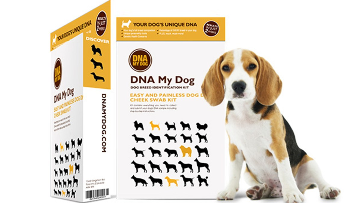 Learn More About Your Pup With This DNA Test, Now 25% Off