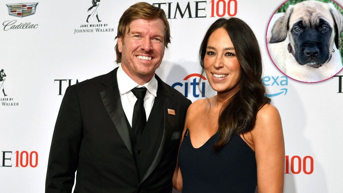 Chip Gaines Surprises Wife Joanna Gaines With an English Mastiff Puppy: 'We Now Have More Dogs Than Children'
