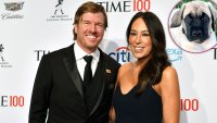 Chip Gaines Surprises Wife Joanna With an English Mastiff Puppy