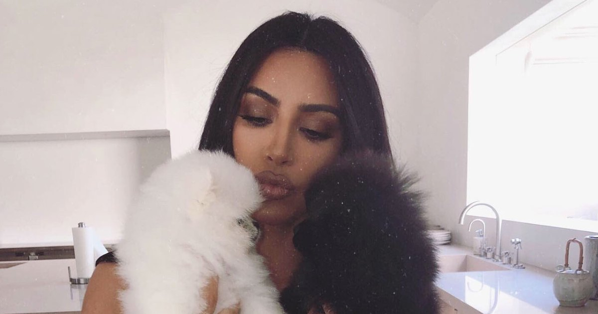 Aw! Kim Kardashian Introduces Adorable New Pups