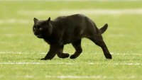 Black Cat Delays Play After Running Onto the Field at Giants-Cowboys Game