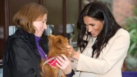 Meghan Markle Helping UK Animal Welfare Patronage Amid Pandemic