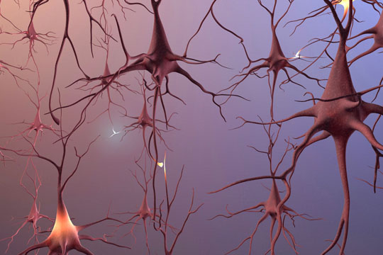 Nerve cells of a healthy brain