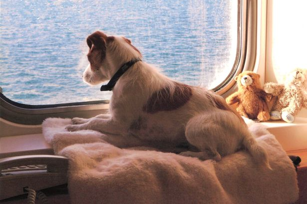 Ferry firm blames Brexit for drop in pets travelling to Europe 4