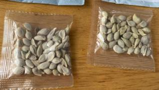 Mystery seeds: Amazon bans foreign plant sales in US 3