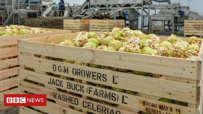 Waste food: What do you do with 86 tonnes of celeriac? 1