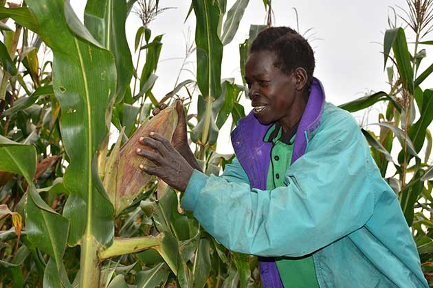 – Successful Crop Innovation Is Mitigating Climate Crisis Impact in Africa – 4
