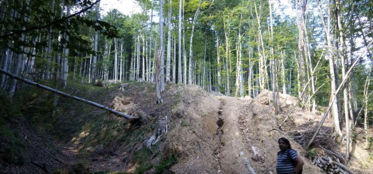 Miniștrii Miniștrii Mediului și Apelor și Pădurilor și directorul Romsilva vor fi audiați în Comisia pentru cercetarea abuzurilor din Senat, în urma unei sesizări USR