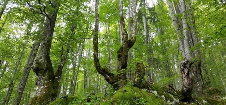 Victorie pentru mediu: CCR dă dreptate USR și PNL în cazul ariilor naturale protejate