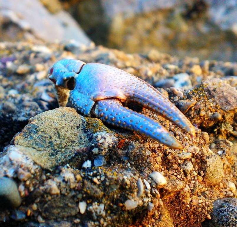 *Blue Claw,* Mara Zilkenat, 2013. From close vantage points, nature's detail, even the carcass of a deceased crayfish, holds incredible beauty.