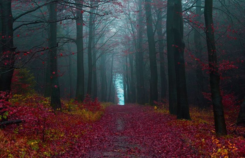 The Roots of the Black Forest