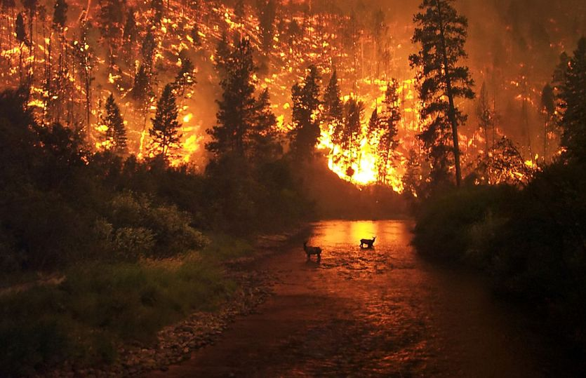 Dealing with Wildfire Damage to Water Supplies