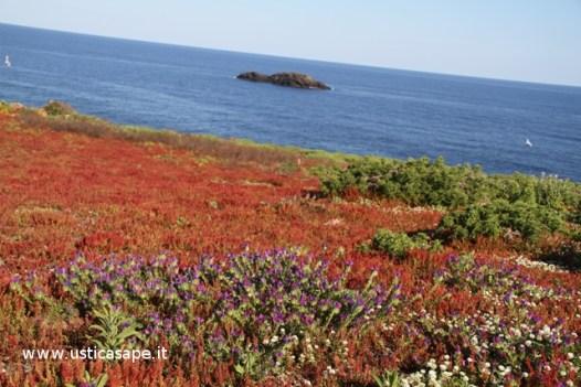 Ustica: fiori spontanei in riva al mare