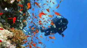 immersioni-subacquee