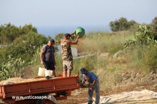 Ustica, il contadino pulisce i ceci con un lieve soffio di vento